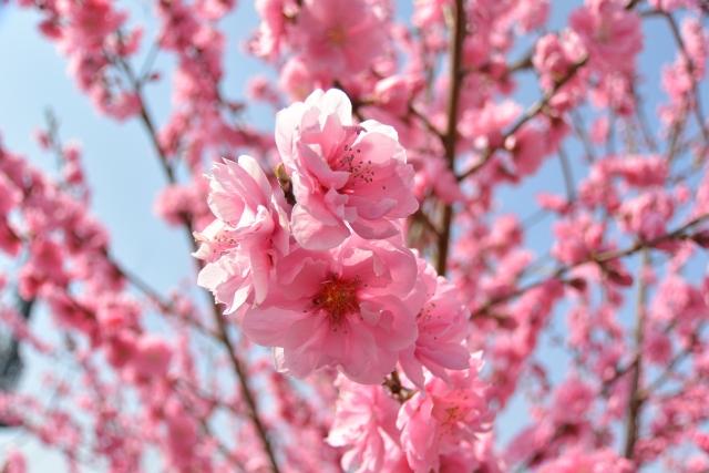 これだけはやっておきたい!洗濯物を花粉から守る方法★
