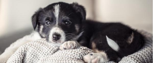使い古したタオルで簡単おもちゃ作り♪愛犬と自宅で遊ぼう